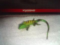 フルタ   日本の動物コレクション1     オキナワキノボリトカゲ