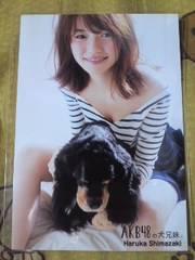送込島崎遥香AKB48の犬兄妹握手会場限定購入特典生写真