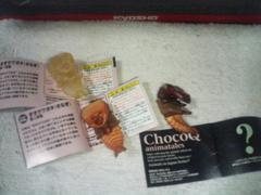 チョコQ アニマル7 オオクワガタさなぎ 第1〜第3段階 シークレット
