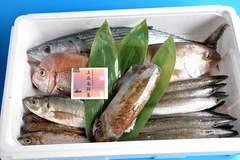 五島列島直送!おたのしみ限定鮮魚パック5000→3000