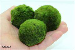 マリモ 毬藻 水草 Mサイズ(3〜4cm) 3個