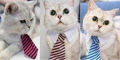 犬・猫用 ネクタイ インスタ映え ストライプ S