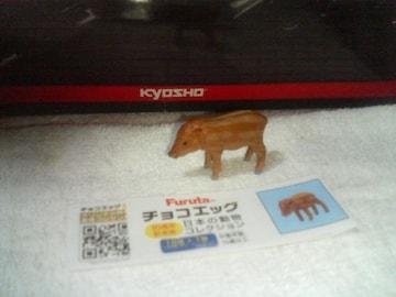 フルタ 10th   日本の動物             イノシシ  仔           ウリ坊