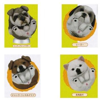 まんまるいぬ 人気者編 4種セット タカラトミーアーツ ガチャポン フィギュア 犬 イヌ