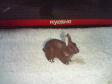 フルタ  日本の動物1  ノウサギ