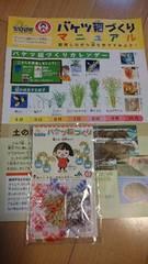 バケツ稲作り/種もみ肥料セット/家庭学習食育教材/小学生理科社会勉強