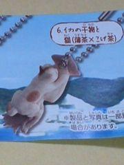 飛びついちゃった猫 イカの干物と猫(薄茶×こげ茶)