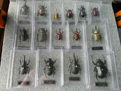 デアゴスティーニ「世界の昆虫15種セット」(和)